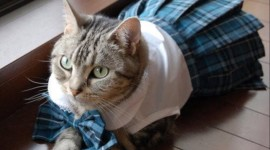 Clothing For Cats Picture Download