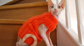 Clothing For Cats Wallpaper