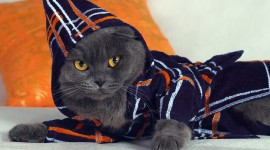 Clothing For Cats Wallpaper For PC