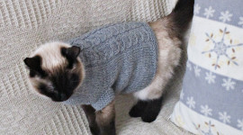 Clothing For Cats Wallpaper Free