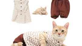 Clothing For Cats Wallpaper Gallery