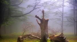 Dead Forest Best Wallpaper