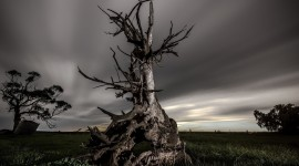 Dead Forest Wallpaper Download