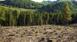 Deforestation Wallpaper Download
