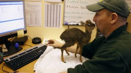 Dik Dik Wallpaper Download Free