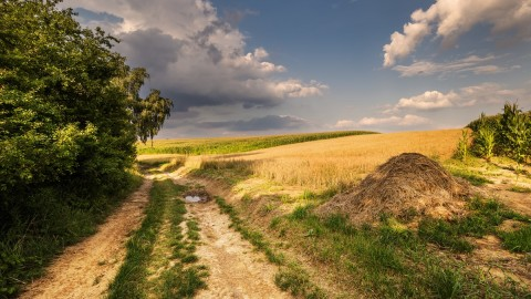 Field Road wallpapers high quality