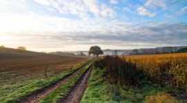 Field Road Image Download
