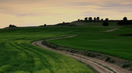 Field Road Photo