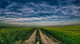 Field Road Picture Download