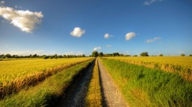 Field Road Wallpaper For Desktop