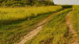 Field Road Wallpaper For IPhone Free