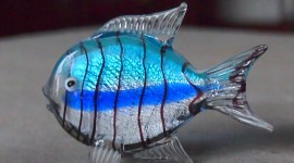 Fish Glass Image Download