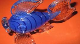 Fish Glass Photo Free