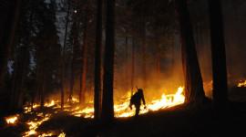 Forest Fires Best Wallpaper