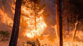 Forest Fires Desktop Wallpaper For PC
