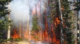 Forest Fires Desktop Wallpaper HQ