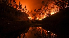Forest Fires High Quality Wallpaper