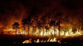 Forest Fires Photo Download