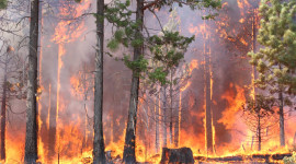 Forest Fires Wallpaper Background