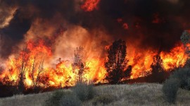 Forest Fires Wallpaper Download