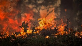 Forest Fires Wallpaper Download Free