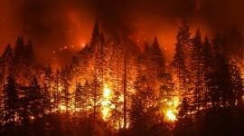 Forest Fires Wallpaper For Desktop