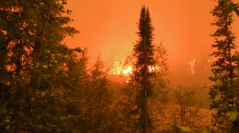 Forest Fires Wallpaper Free