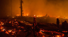 Forest Fires Wallpaper Gallery