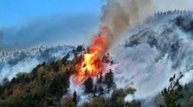 Forest Fires Wallpaper HD