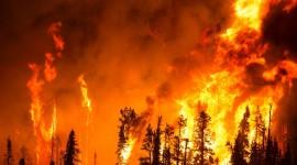 Forest Fires Wallpaper High Definition