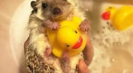 Funny Hedgehogs Image