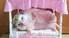 Funny Hedgehogs Wallpaper Gallery