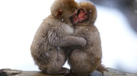 Funny Monkeys Wallpaper Gallery