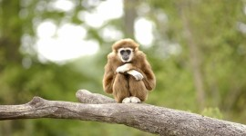 Gibbon Rehabilitation Center Desktop Wallpaper HD