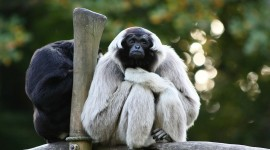 Gibbon Rehabilitation Center Wallpaper Download Free