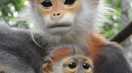Gibbon Rehabilitation Center Wallpaper For IPhone Free