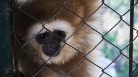 Gibbon Rehabilitation Center Wallpaper High Definition