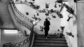 Henri Cartier-Bresson Photos Photo Free