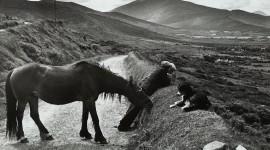 Henri Cartier-Bresson Photos Wallpaper