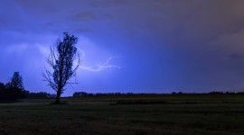 Lightning Strikes A Tree Image Download