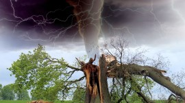 Lightning Strikes A Tree Photo Free