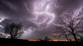 Lightning Strikes A Tree Picture Download