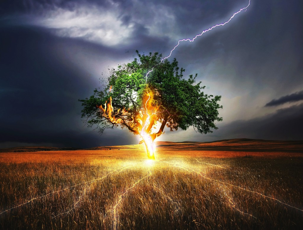Lightning Strikes A Tree wallpapers HD