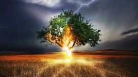 Lightning Strikes A Tree Wallpaper