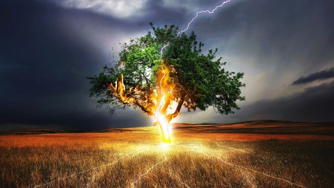 Lightning Strikes A Tree wallpapers high quality
