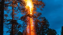 Lightning Strikes A Tree For IPhone
