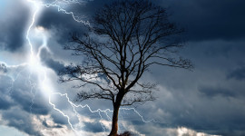 Lightning Strikes A Tree Wallpaper For PC