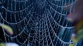 Spider Web Best Wallpaper