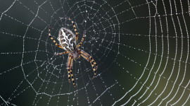 Spider Web Desktop Wallpaper For PC