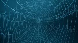 Spider Web Desktop Wallpaper HD